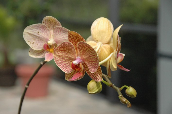 Here's one of the beautiful orchids on our patio from April 2014.