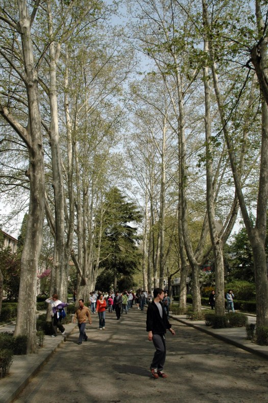Here's a shot of a tree-lined street in Xi'an when we visited China in 2007. I believe we were on a visit to Xi'an University of Architecture and Technology when I got the shot. The Barron Collier High School marching band visited the university as part of the tour.