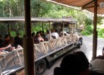 After we boarded our tour bus at the Kilimanjaro Safaris ride, we were passed by another bus. I believe everyone got the same tour, though. Were were on a visit to the Animal Kingdom park at Walt Disney World in October 2014 when I snagged this shot.