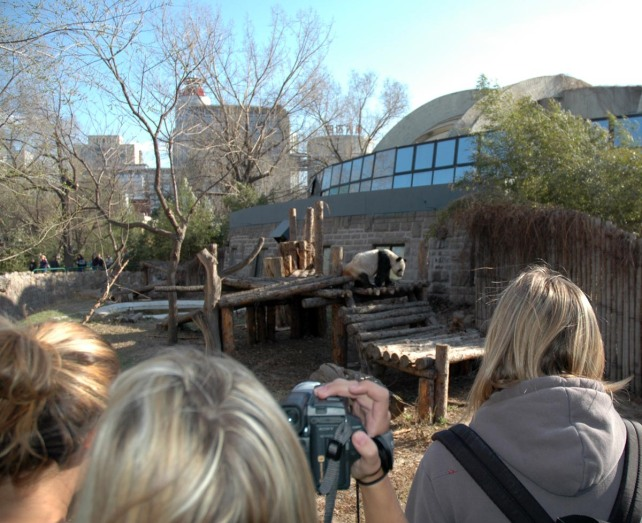 Here's another shot of the panda zoo in Beijing. Everyone – and I mean everyone – takes a photo of the pandas when they visit China. We were there with a tour group in 2007.