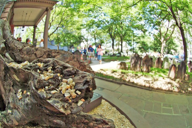Here's another shot I got of the stump of a 100-year-old Sycamore at St. Paul's Chapel in New York City in 2007. St. Paul's Chapel was used in the wake of the 9-11 terrorist attack on New York's Twin Towers in 2001 by rescuers and emergency workers. The tree was destroyed when debris from the Twin Towers rained down on it. However, the chapel's trees protected it and not one pane of glass was damaged. The stump commemorates the heroism in the tragedy of that day. The detail in this shot is some of the stones on the stump.