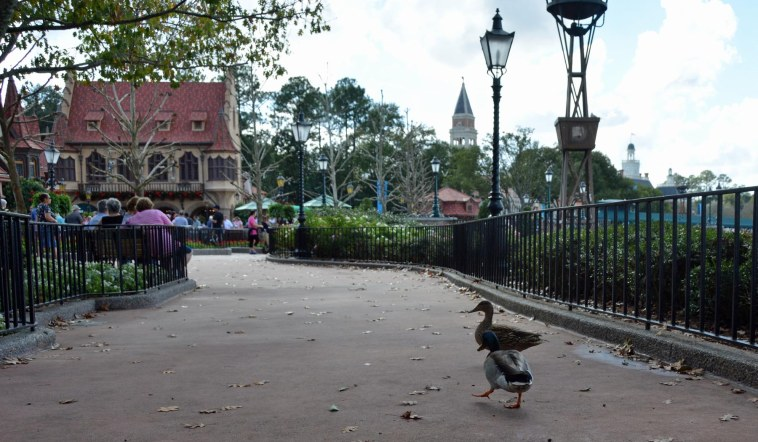 Allison got this shot of some ducks waddling along a path between the Canada and United Kingdom pavilions at EPCOT on Jan. 3, 2015. She and Debbie made a day trip to Walt Disney World for that visit.