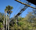 There are pathways and bridges for walking tours through wilderness areas of Animal Kingdom at Walt Disney World for walking tours. We were on the Kilimanjaro Safaris ride when I snapped this photo of an overhead walkway bridge on Feb. 8, 2015, from our tram.