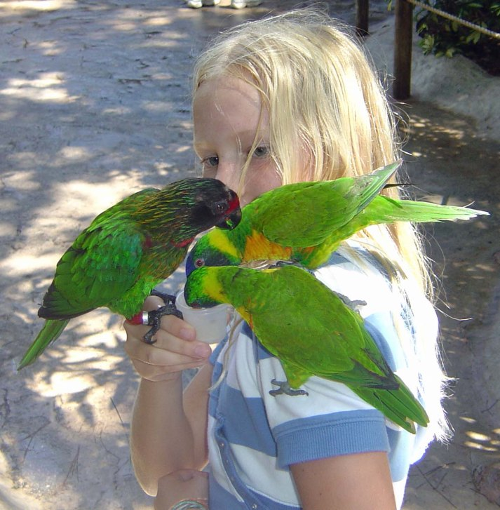 Here's another one from the digital photo vault. Allison and I always stopped by Busch Gardens at Tampa as we returned from our annual father-daughter trip to Walt Disney World in the fall. Here's a shot I got in 2004 (I believe; it's difficult to tell even with a digital library). Allison particularly enjoyed the walk-through aviary and it's no wonder why.