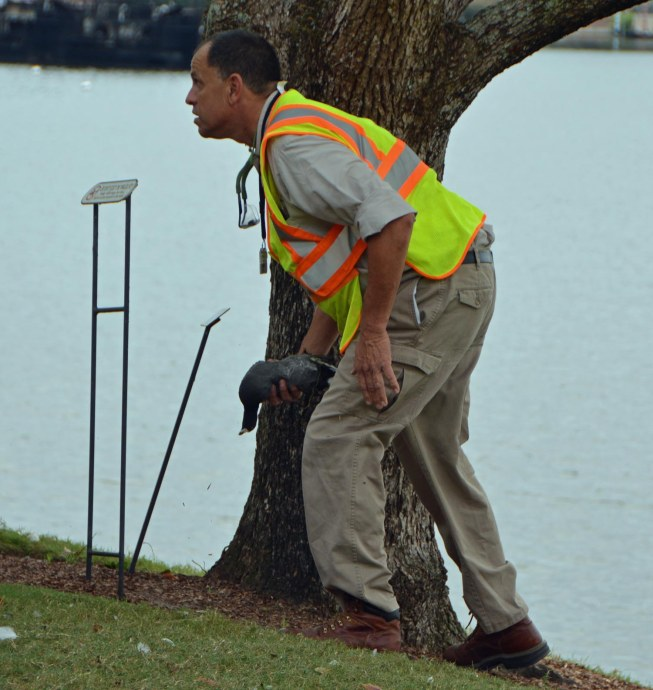 Allison got this shot of a cast member who had the task of removing a dead bird from beside a tree in the World Showcase at EPCOT on Nov. 1, 2015. We were there for the Epcot International Food & Wine Festival at Walt Disney World when the bird keeled over.
