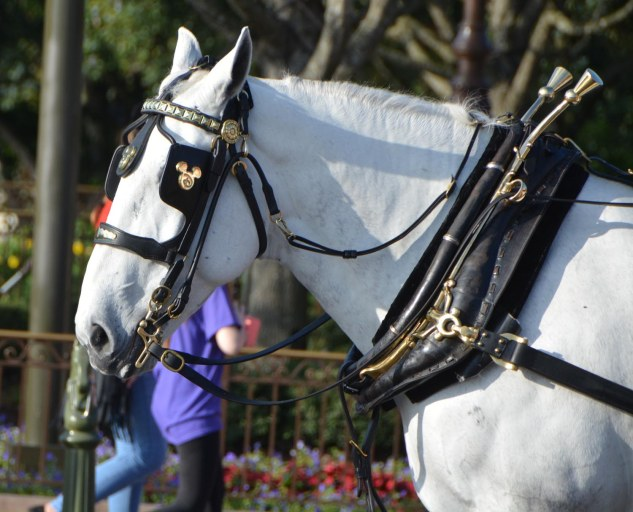 Allison got this shot of a horse at the Magic Kingdom – and notice the Mickey logo on its bridle. She and Debbie were at Walt Disney World for a pre-Christmas visit on Dec. 16, 2015, when she took the photo.