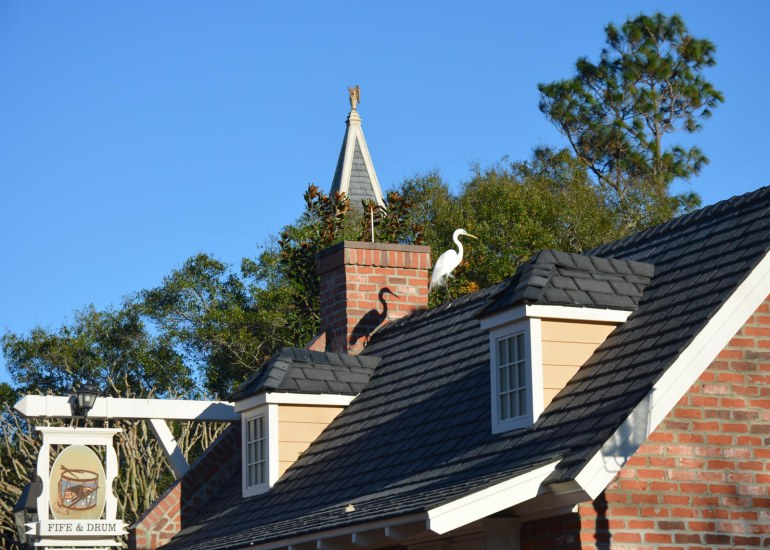 This bird is not part of the Fife and Drum Tavern at the World Showcase at EPCOT. I caught it in this photo just after it alighted from a quick flight from the Seven Seas Lagoon on Feb. 5, 2016, during our long weekend at Walt Disney World.