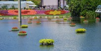 OK, call me paranoid! I saw these floating flower arrangements moving! It was like some kind of surveillance system in the lake as you enter World Showcase at EPCOT. We were at Walt Disney World on April 10, 2016, for this past season's EPCOT International Flower & Garden Festival when I got the shot.