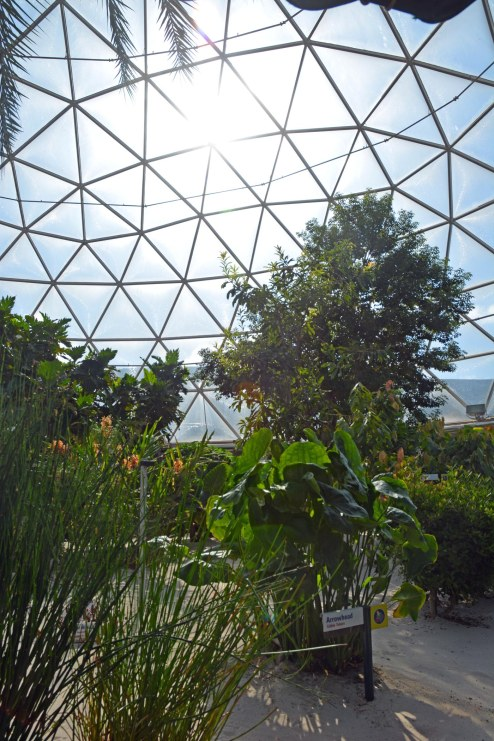 """Here's another shot from inside the greenhouse component of The Land at EPCOT. The Living with the Land is my favorite """"little"""" ride at Walt Disney World. I got this shot on Aug. 19, 2016."""