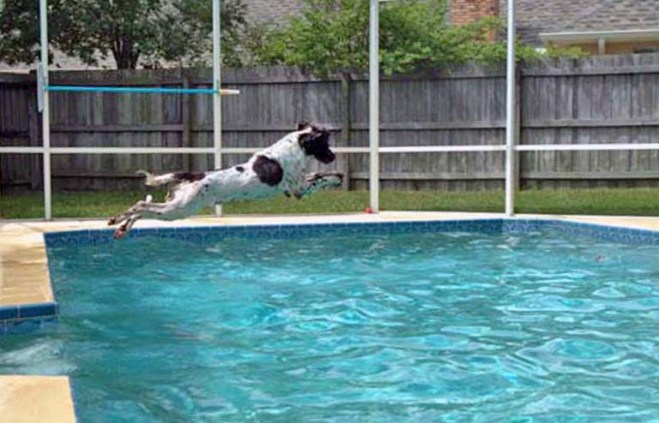 Here's a photo I took of my friend's hunting dog Badger in August 2007. My son and I were visiting his house in Winter Springs, Fla., and Badger showed us his love of the water. Well, it's nearly 10 years later and Badger's having challenges.
