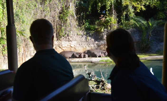 Here's another photo of hippopotami (Latin plural) that I originally wrote that don't look hungry, hungry! A couple of guests frame the shot of these sedate mammals at the Animal Kingdom park on Feb. 8, 2015, at Walt Disney World. We were on the Kilimanjaro Safaris ride when I snapped the photo.