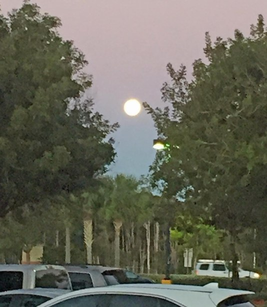 Here's a view of the current big bright moon (I don't know all the astral specifications) that's making the evening and, in this case, early morning sky something special. I got this shot just before 7 a.m. on Feb. 11, 2017, in Naples, Fla.